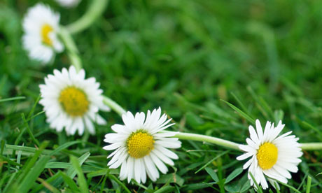 Image result for daisy chain
